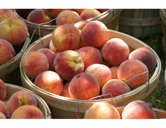 Peach prices sky high after heavy losses in Southeast US.