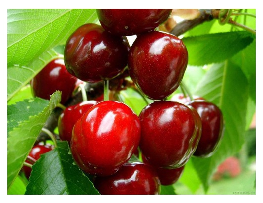 Chilean cherry deal delayed by up to  10 days, says industry rep