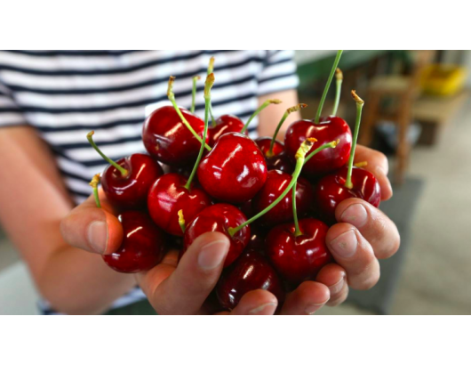 Cherry prices to go up after unseasonable rain New Zealand